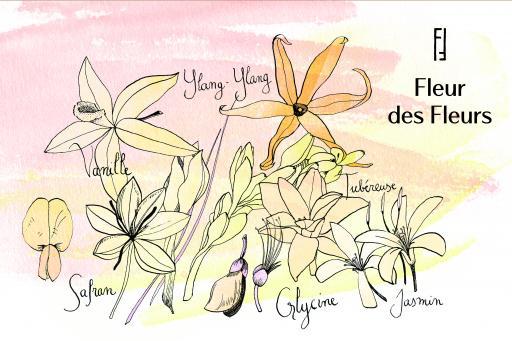 Une Nuit Nomade Fleur des Fleurs Illustration